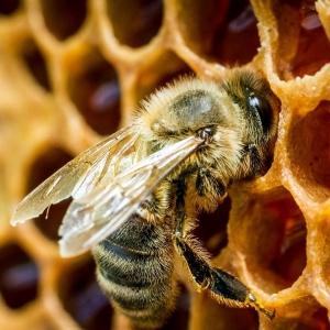 Пчёлапакеты
